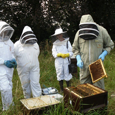 beekeeping training at the apiary