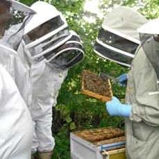 Members training at the Introduction to Beekeeping Course
