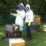 Beekeepers inspecting a frame of honeybeesbees